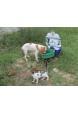 Sokak Hayvanları Su ve Mama Kabı Tekli