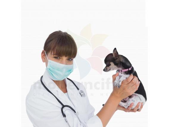 Lastikli cerrahi ağız maskesi