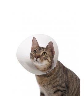 Kedi ve Köpek için Ekonomik Yakalık 75 mm