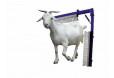 Keçiler için Sabit Kaşıma Fırçası