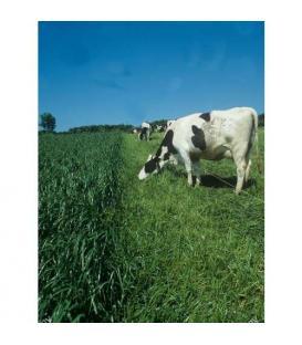 ELEKTRİKLİ ÇİT