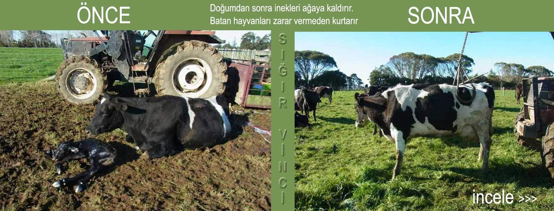 Sığır Kaldıracı